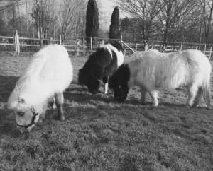 Teddy, Prudence & Arabella